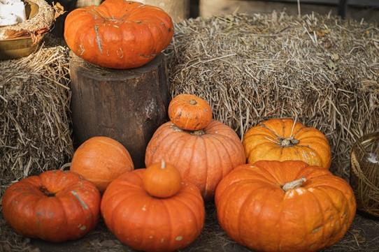 pile of orange pumpkins on a farm